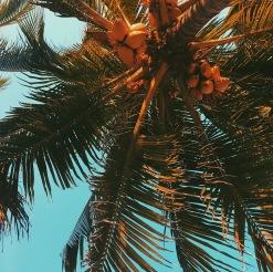 Palm views